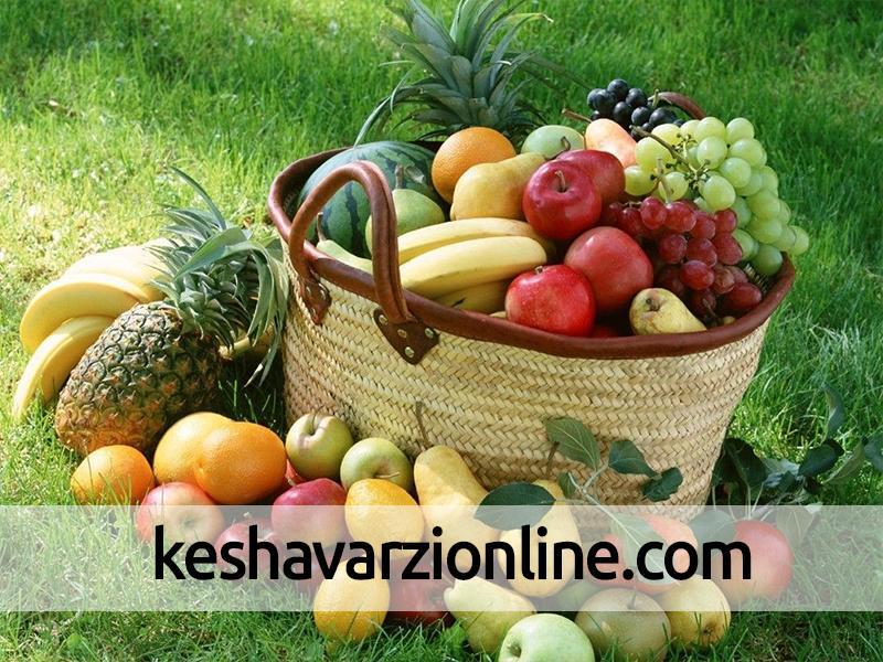 تولید 26 هزار تن میوه تابستانی در باغات کردستان