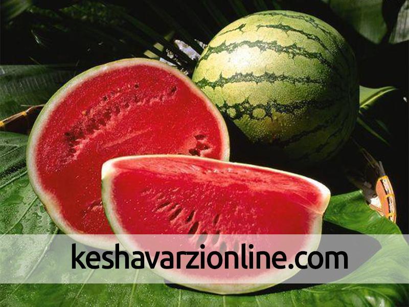 پیشبینی برداشت بیش از 48 هزار تن هندوانه در خراسانجنوبی