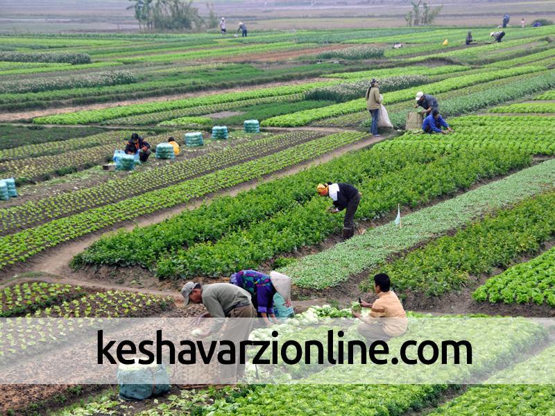 کاهش 25 درصدی تولید محصولات زراعی در رزن