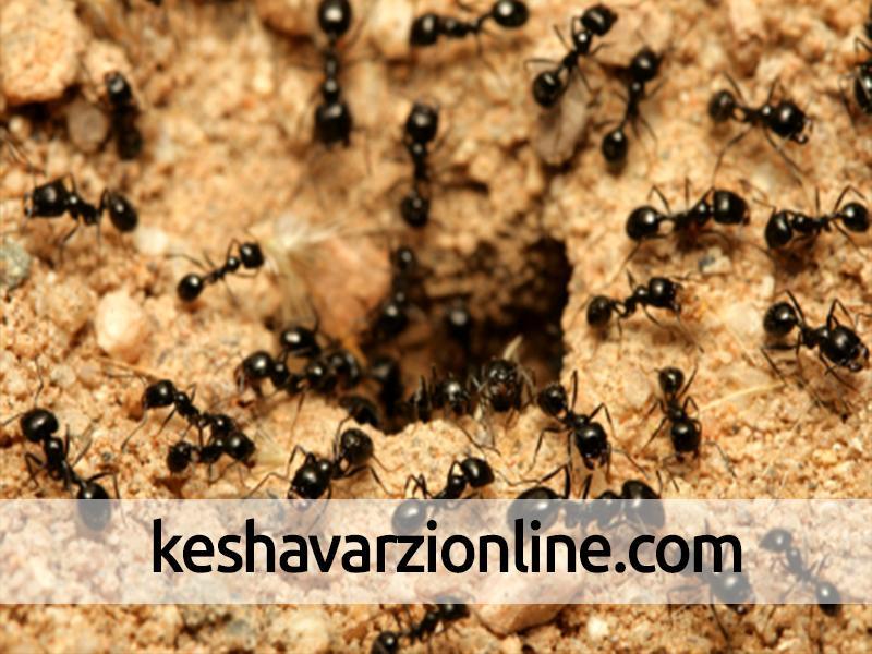 بهترین روش کنترل ترافیک با الهام از مورچهها