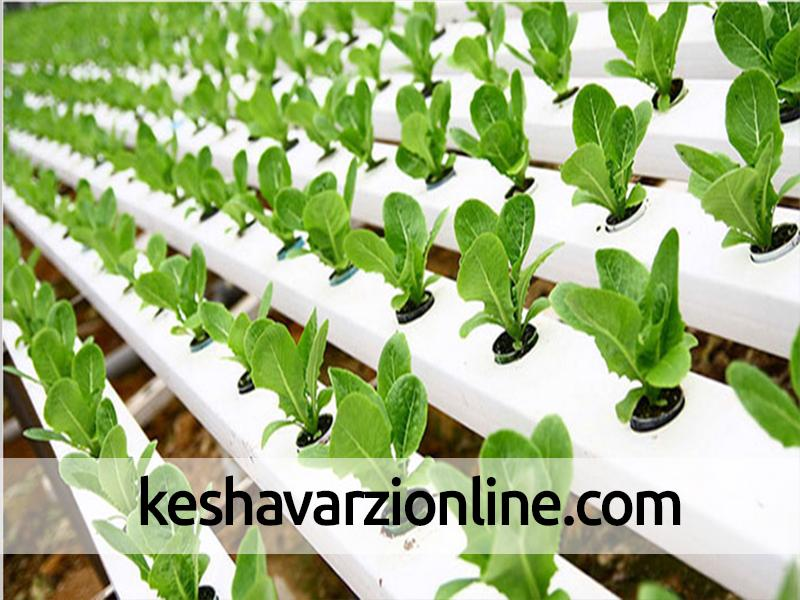 بیش از 400 هزار اصله نشاء گیاهان دارویی در خراسان شمالی تولید شد