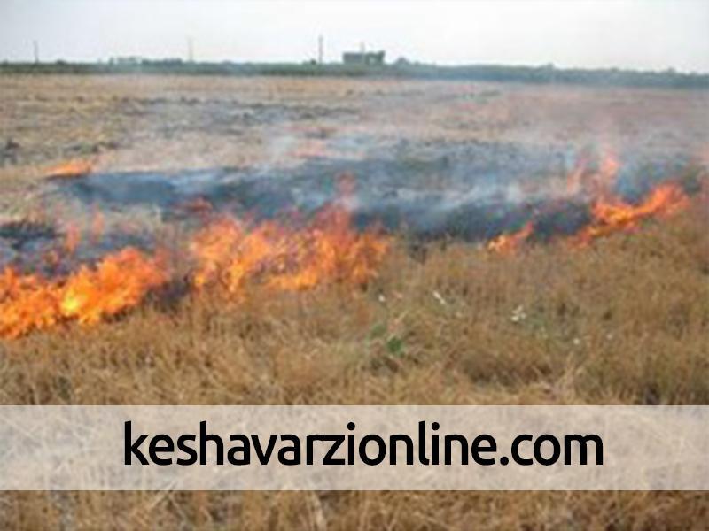 خسارت 6 میلیارد ریالی آتش سوزی به باغداران باشت