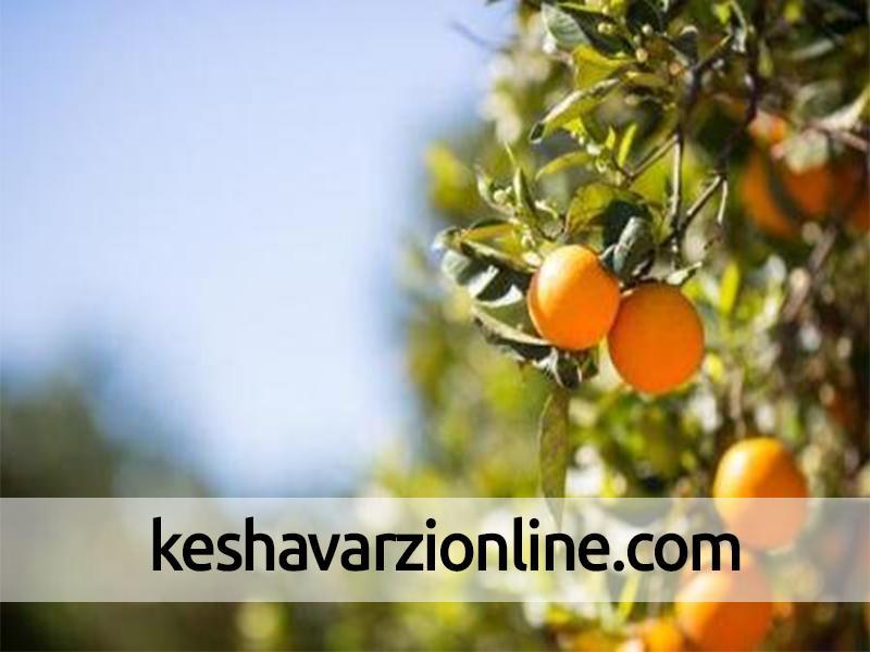 بیمه باغهای مرکبات سوادکوه