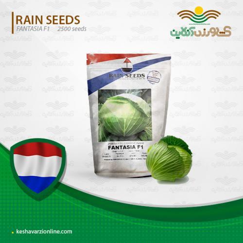بذر کلم برگ سبز هلندی