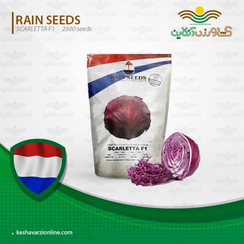 بذر کلم برگ قرمز هلندی