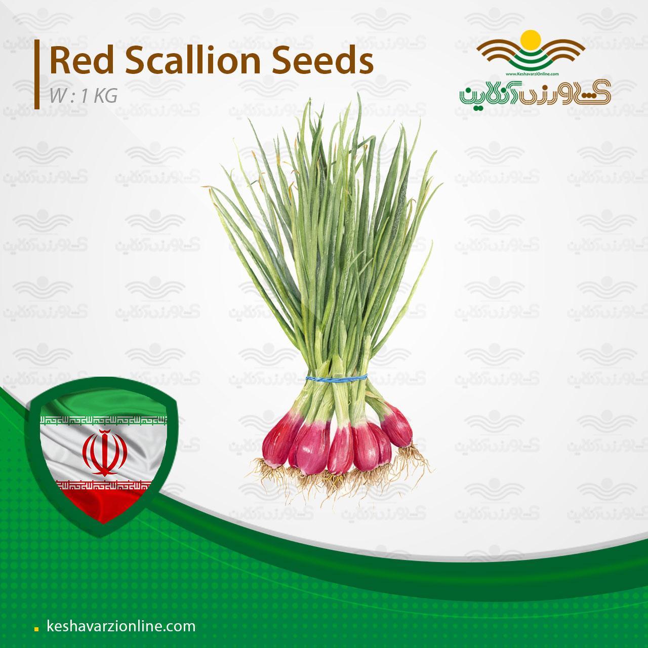 بذر پیازچه قرمز بهمراه روش کاشت بذر پیازچه قرمز