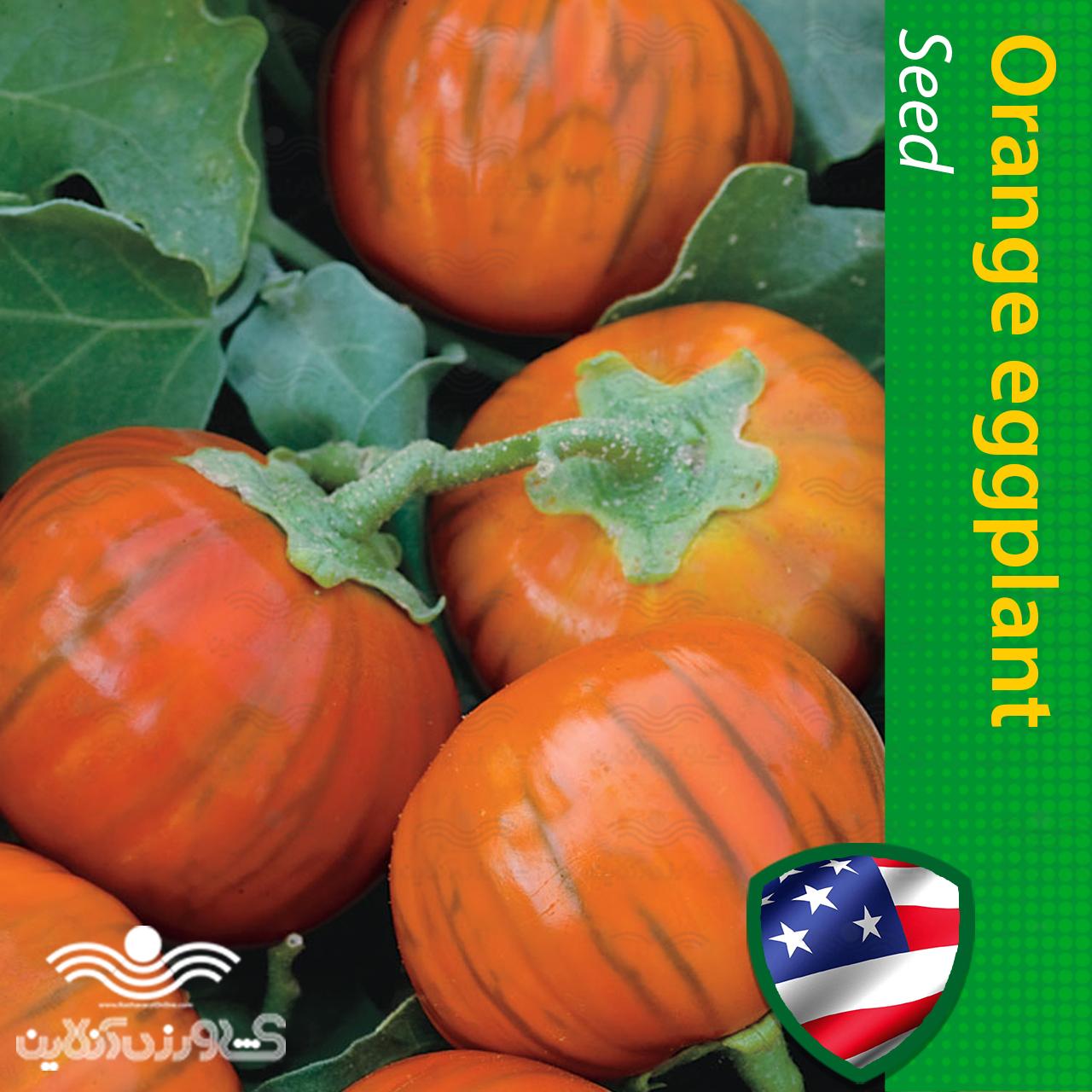 بذر بادمجان پرتقالی و نحوه کاشت بادمجان پرتقالی