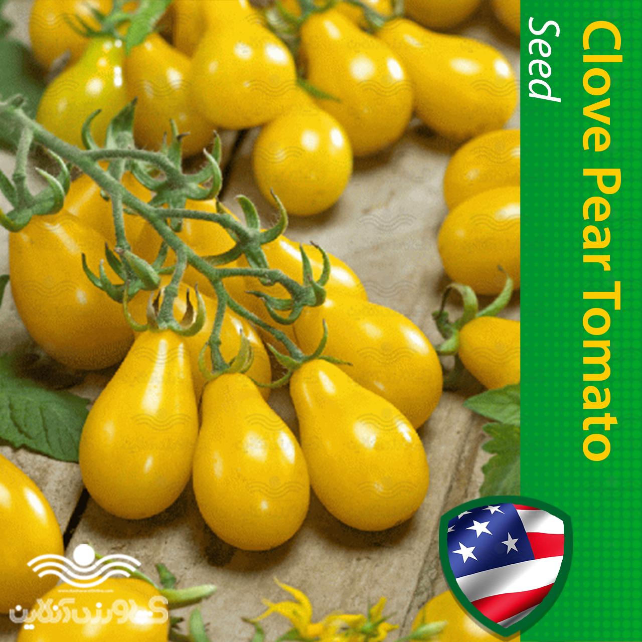 بذر گوجه گلابی خوشه ای زرد و روش کشت بذر گوجه گلابی خوشه ای