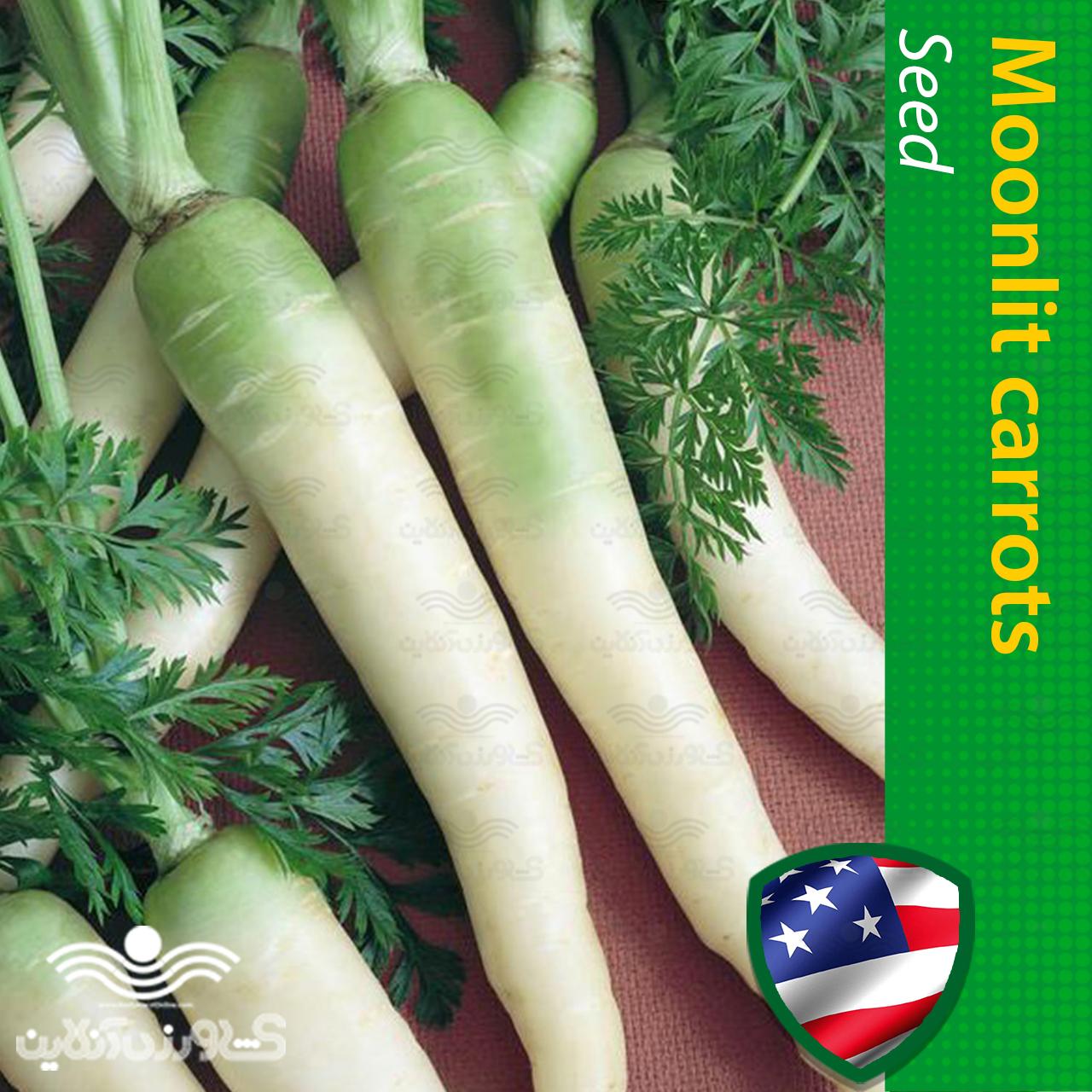 بذر هویج مهتابی و روش کاشت هویج مهتابی