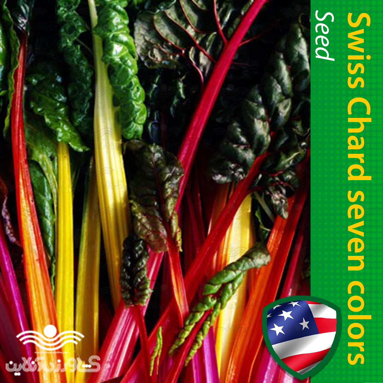 بذر سوییس چارد هفت رنگ و روش کاشت سوییس چارد هفت رنگ