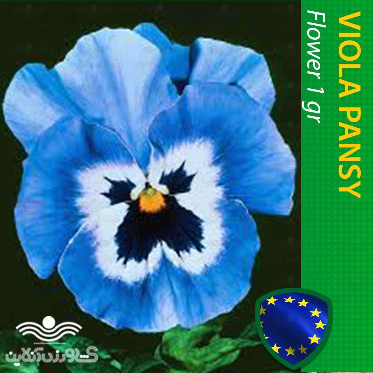 بذر گل بنفشه آبی خالدار