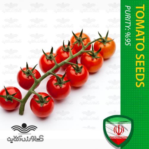بذر گوجه چری یا گیلاسی خوشه ای گرد