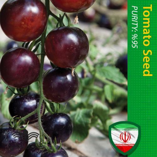 بذر گوجه فرنگی گیلاسی بلک چری