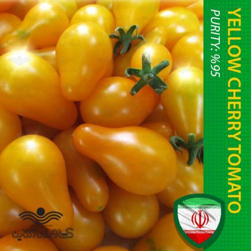 بذر گوجه گیلاسی زرد گلدانی