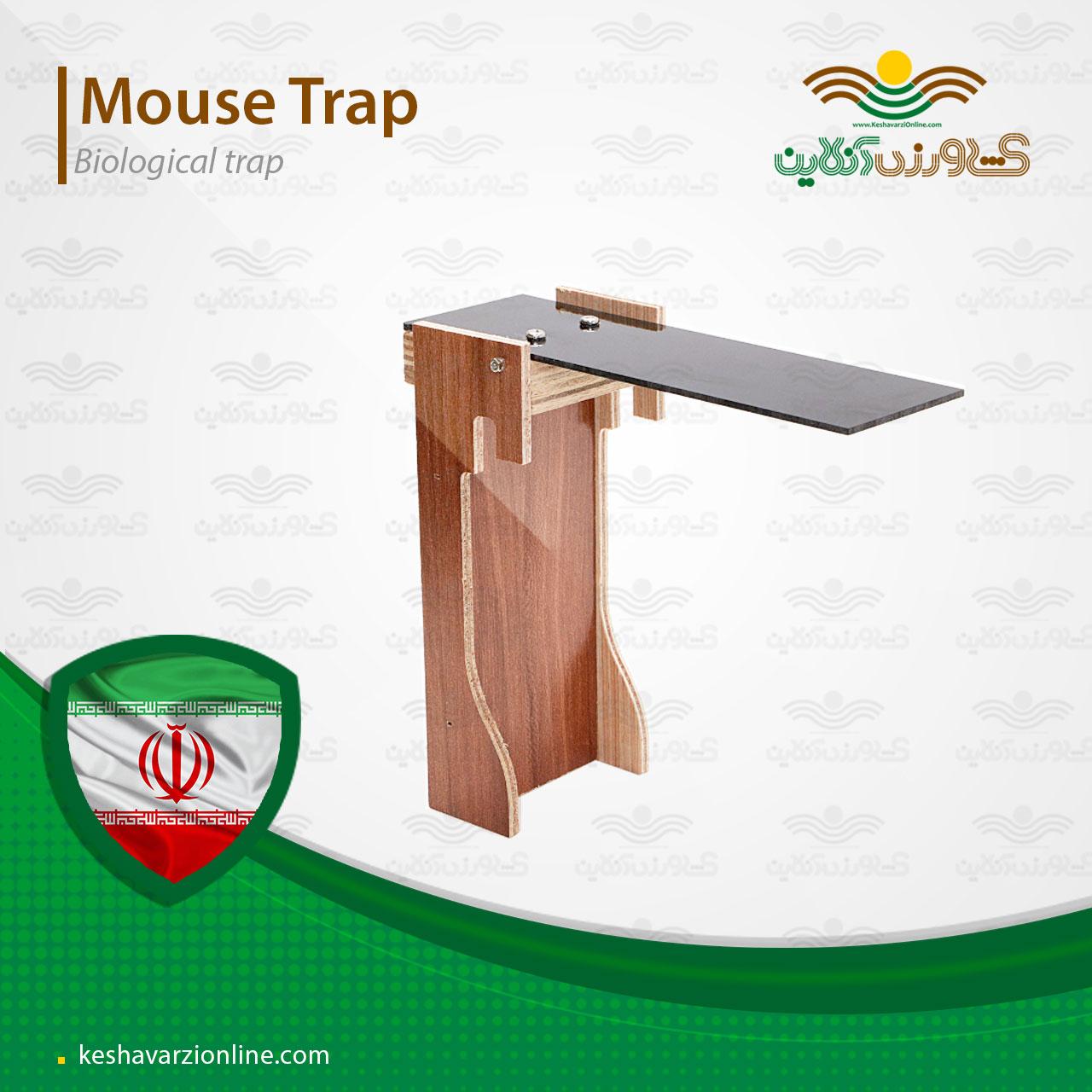 بهترین تله برای گرفتن موش و ساده ترین روش گرفتن موش