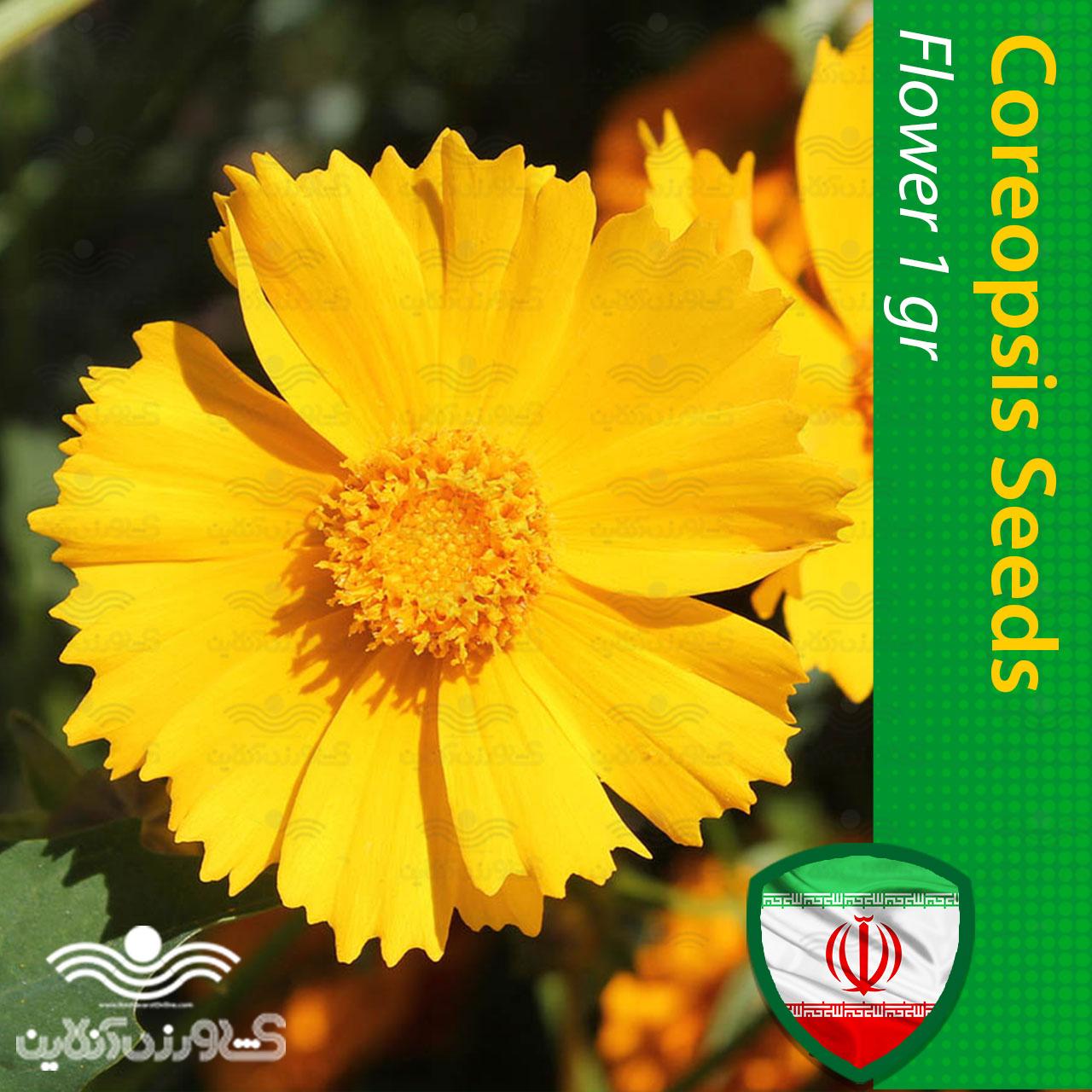 بذر گل کوریوپسیس اشرفی زرد و روش کاشت
