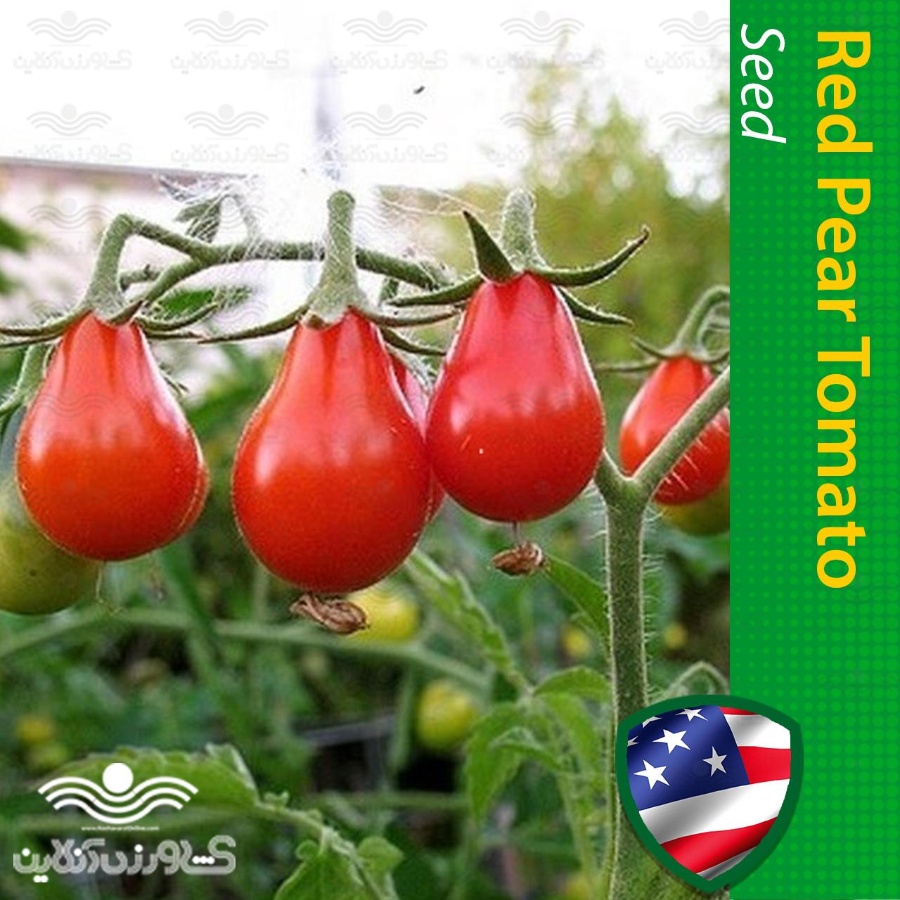 بذر گوجه گلابی قرمز چری