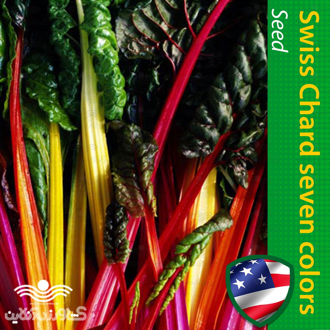بذر برگ چغندر سوییسی