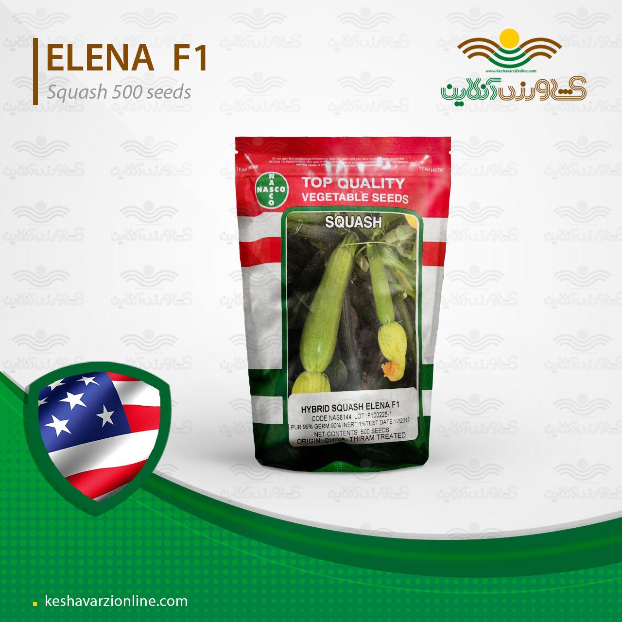 بهترین بذر کدو سبز خورشتی النا آمریکایی