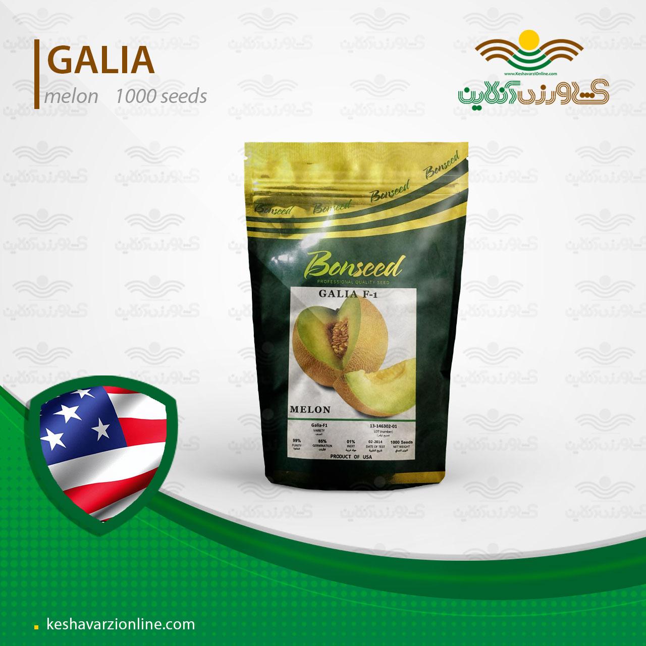بذر ملون گالیا آمریکایی