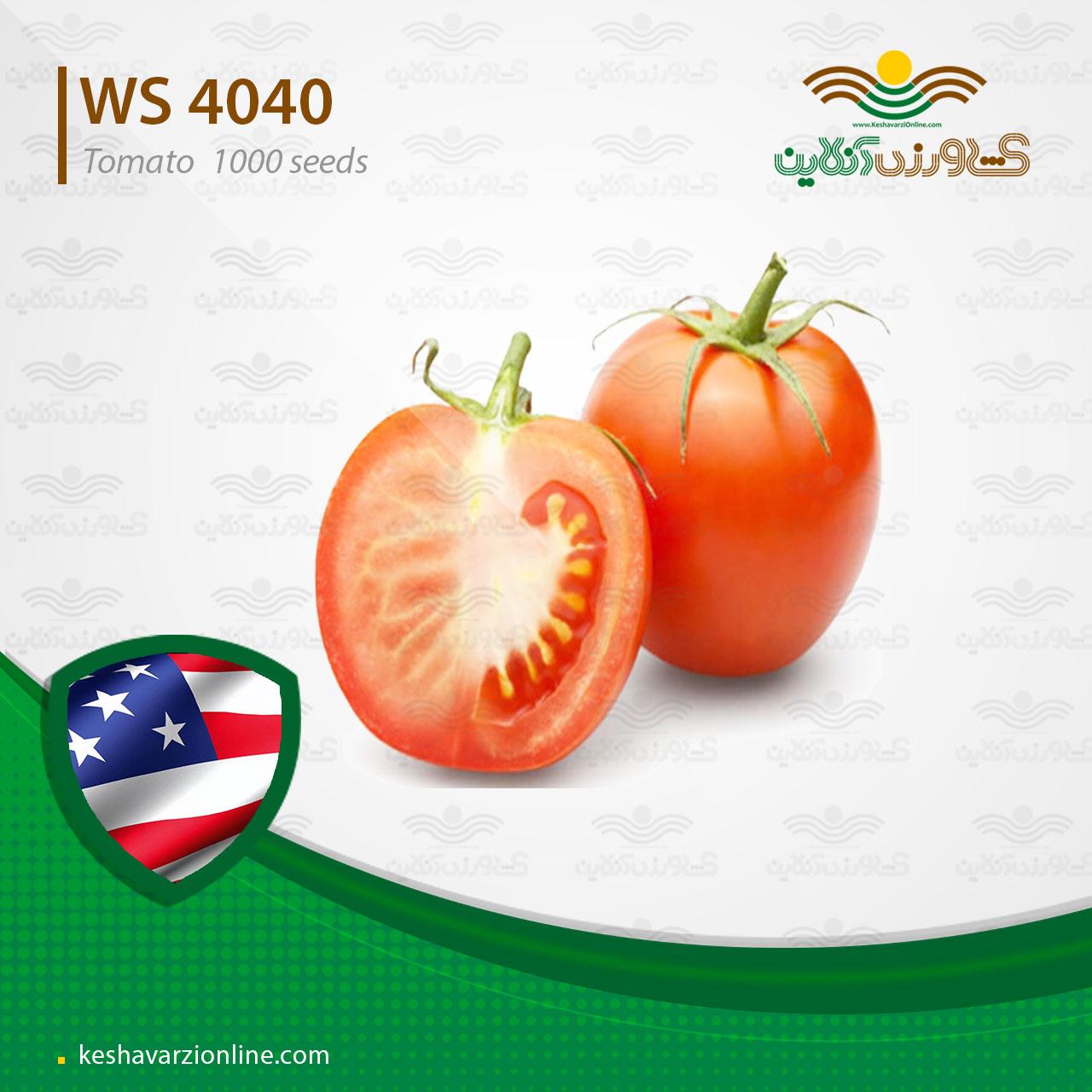 بذر گوجه فرنگی هیبرید دبلیواس 4040