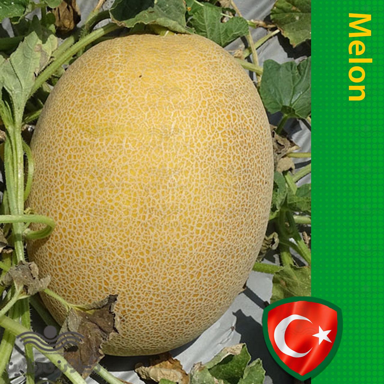بذر خربزه آناناسی شیرین ترک