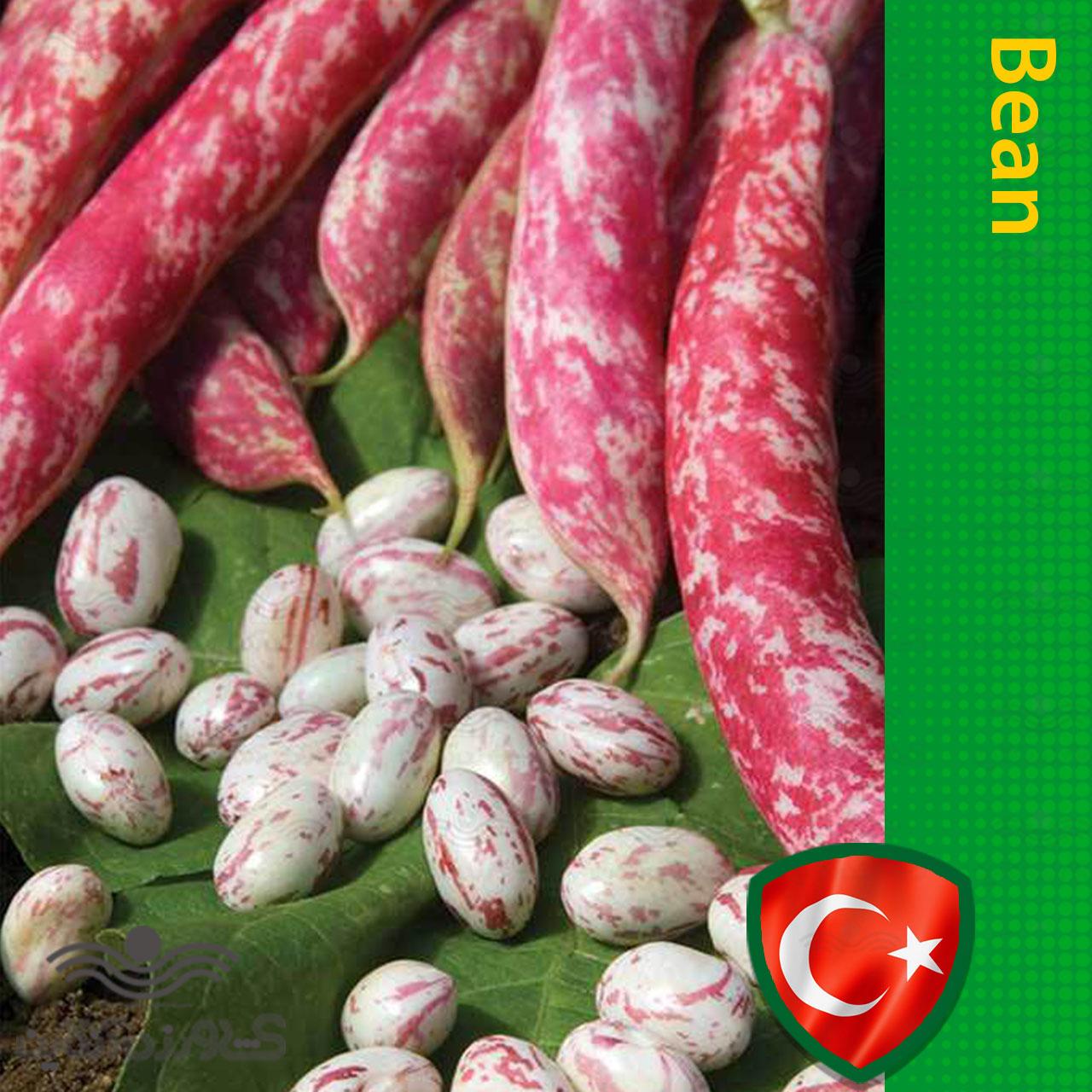 بذر لوبیا چیتی در بسته بندی خانگی