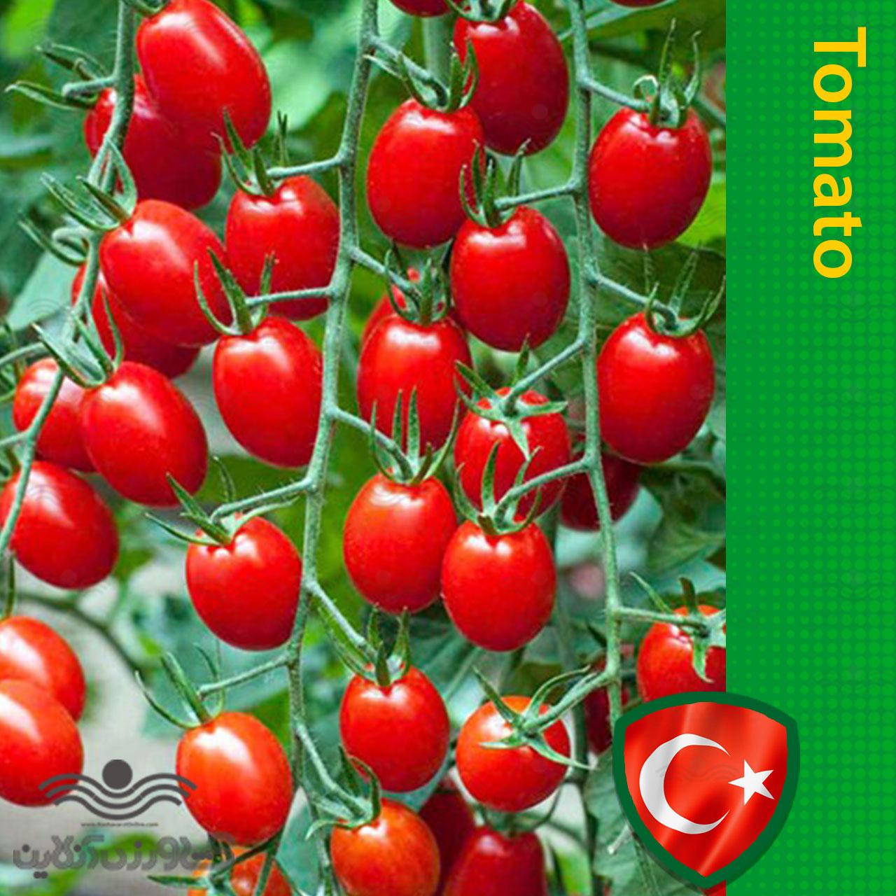 خرید اینترنتی بذر گوجه فرنگی سرخ گیلاسی