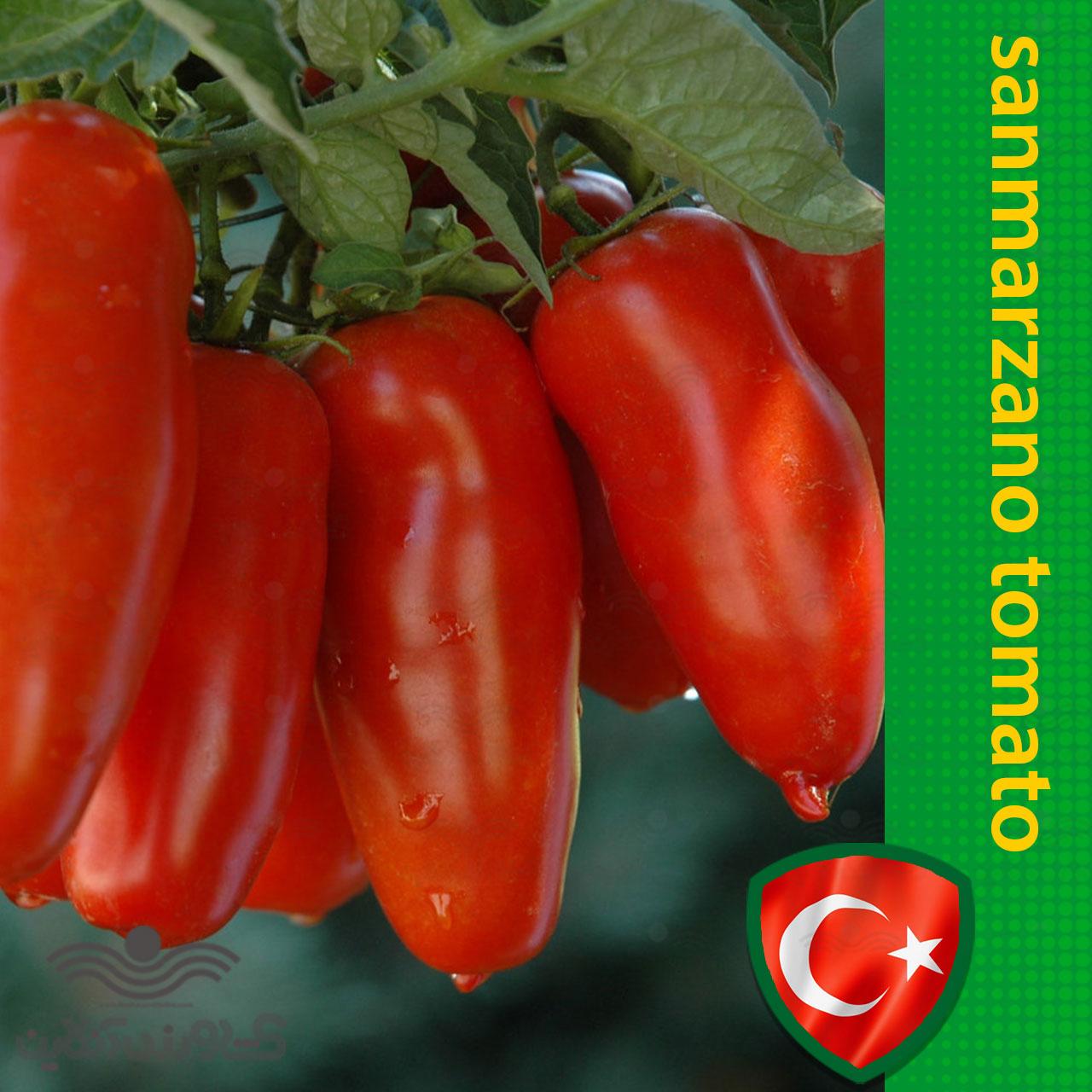 بذر گوجه فرنگی سن مارزانو ترک