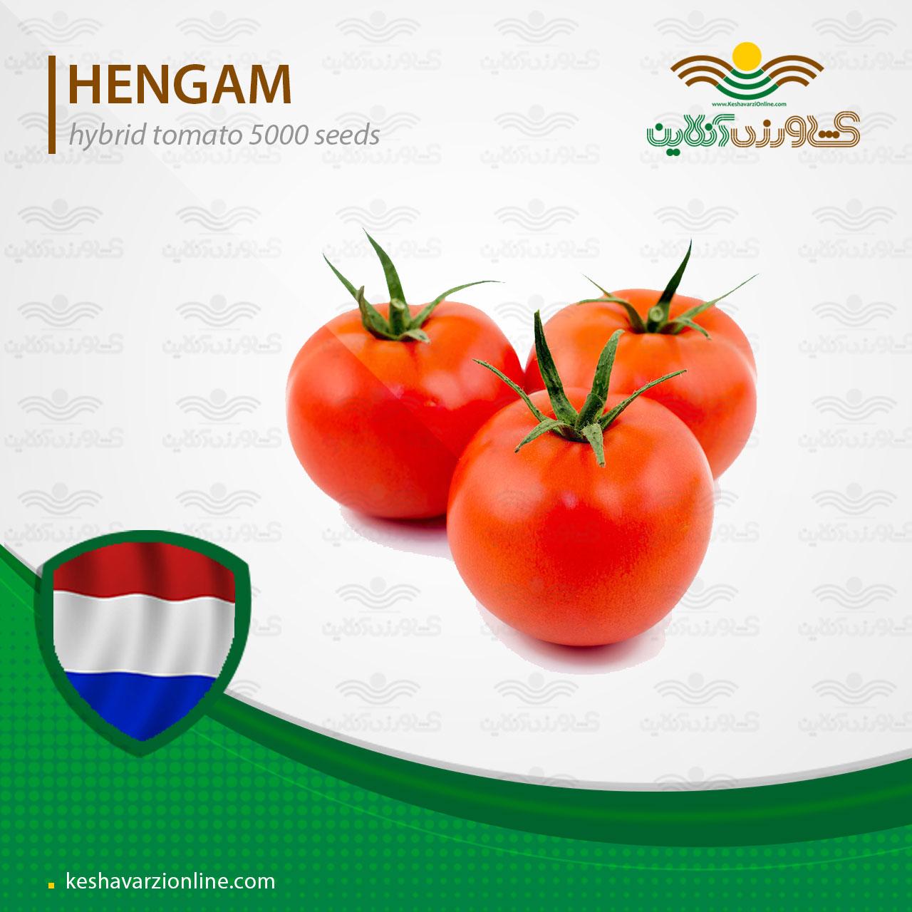 بذر گوجه فرنگی هنگام