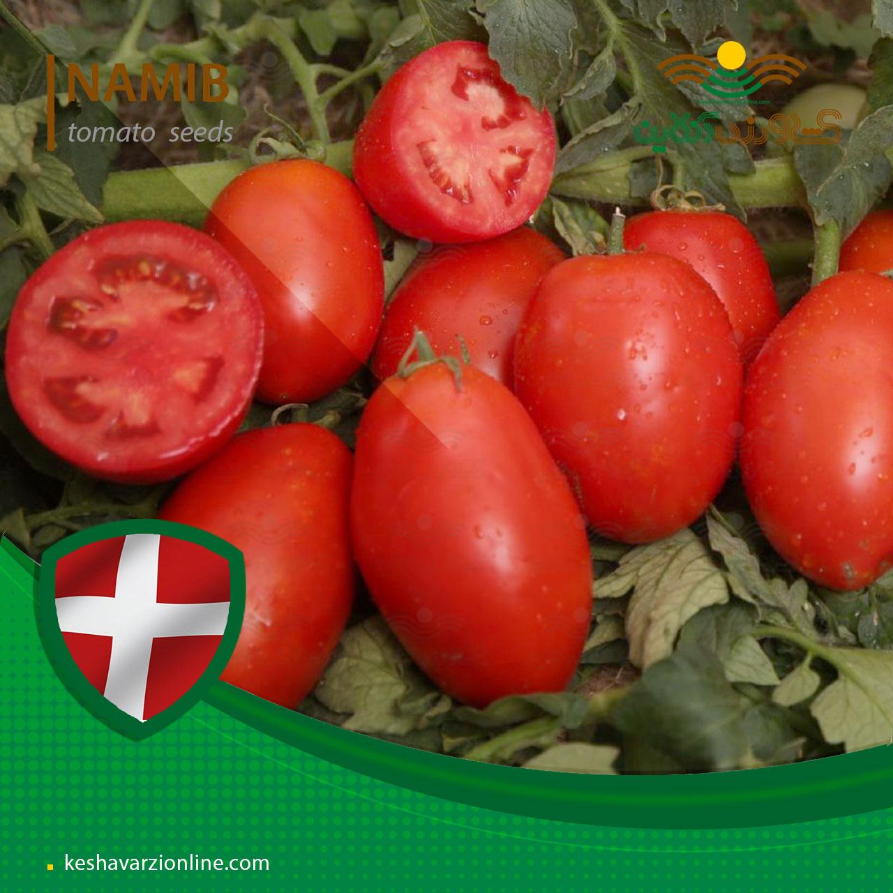 بذر گوجه فرنگی نامیب