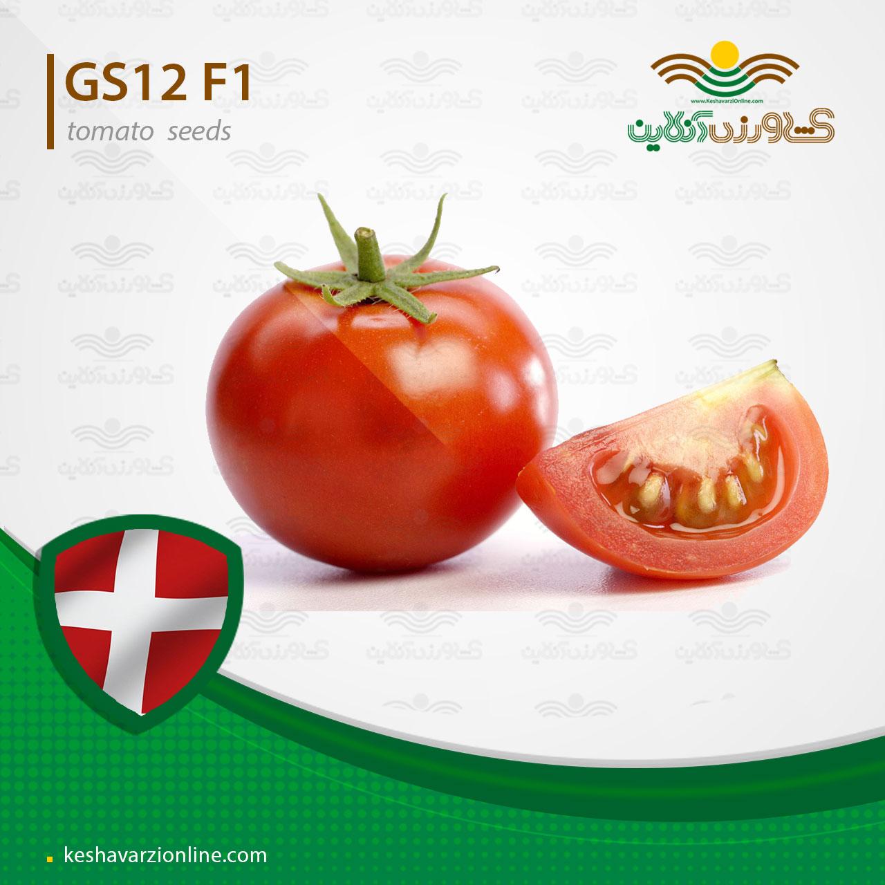بذر گوجه فرنگی جی اس 12