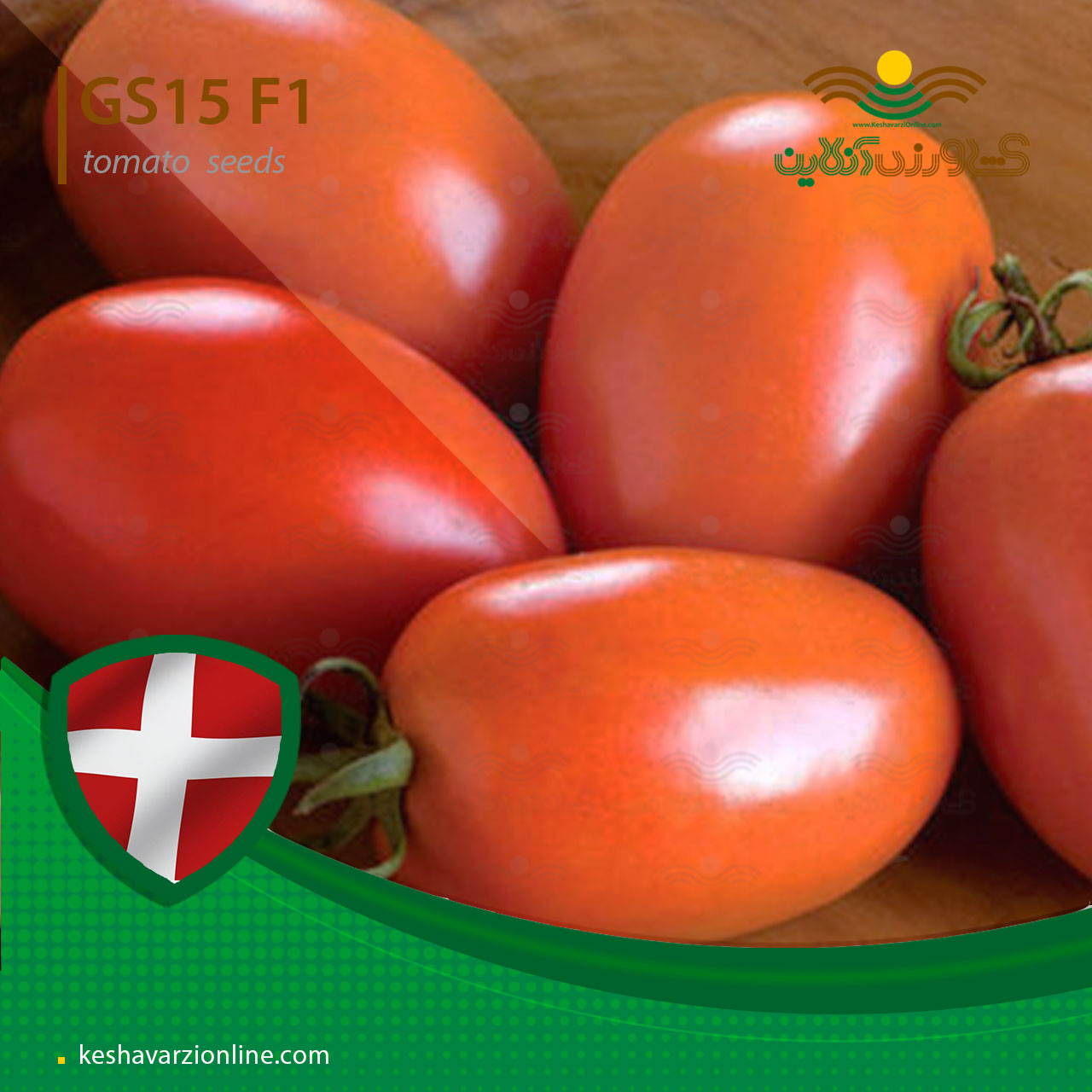 بذر گوجه فرنگی جی اس 15
