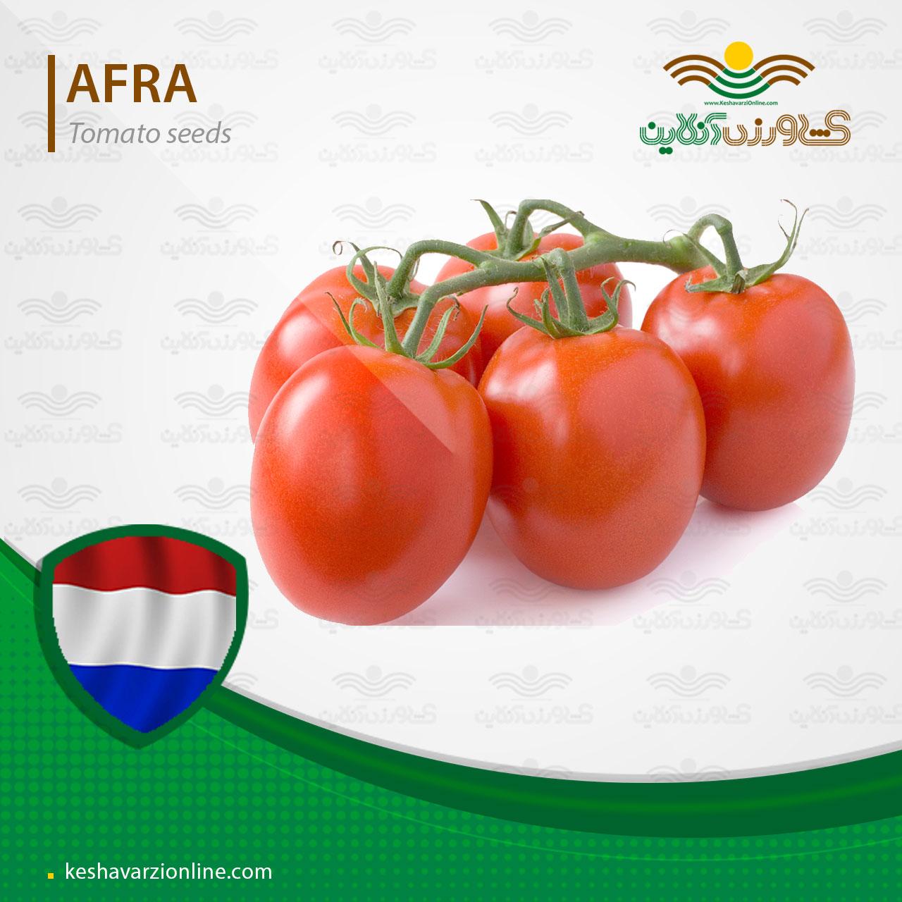 بذر گوجه فرنگی افرا