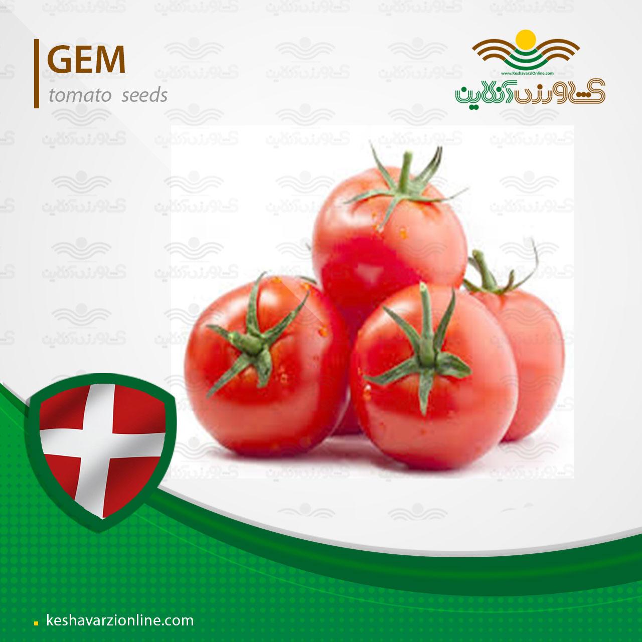 بذر گوجه فرنگی جم
