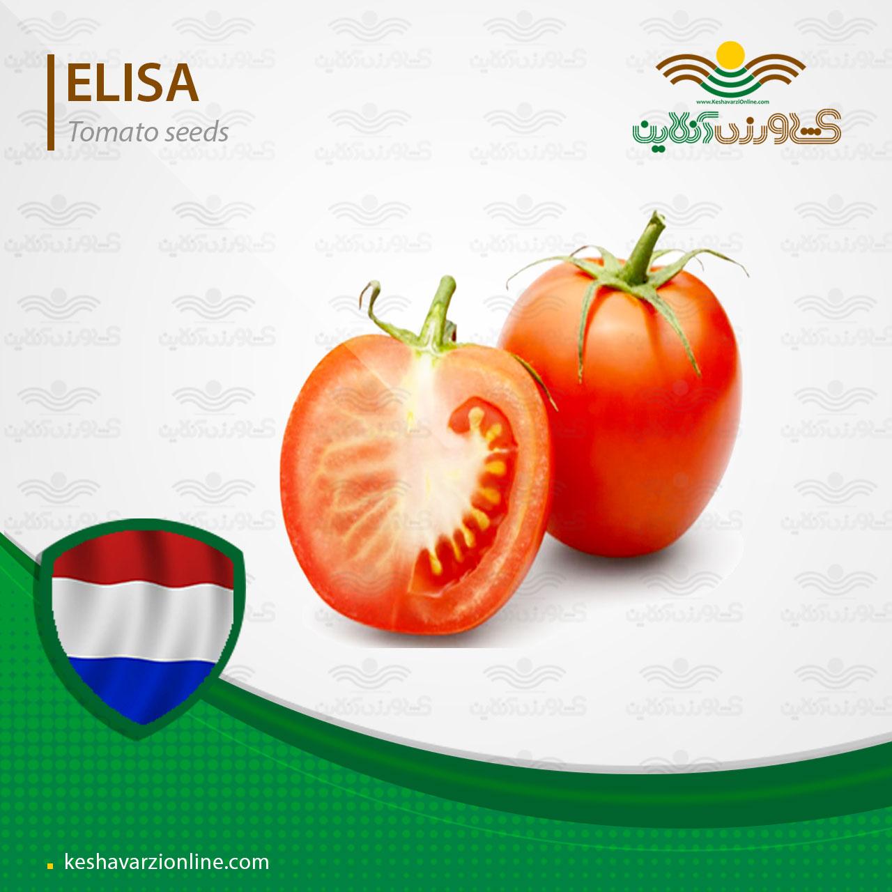 بذر گوجه فرنگی الیسا