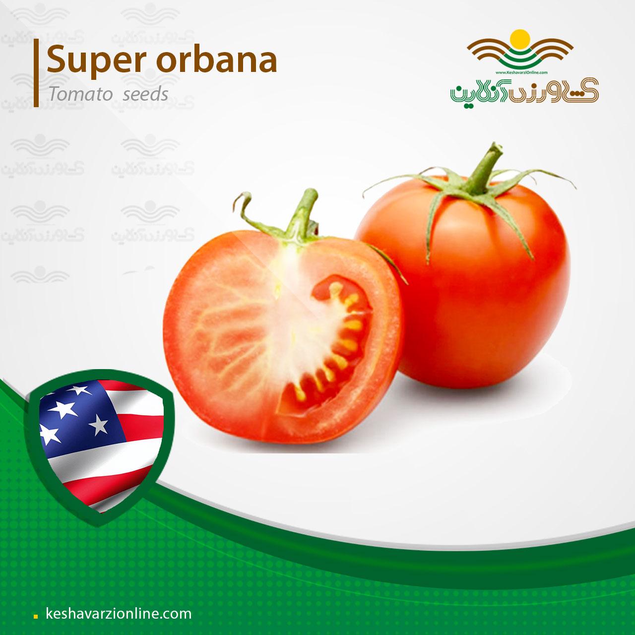 بذر گوجه فرنگی سوپر اوربانا