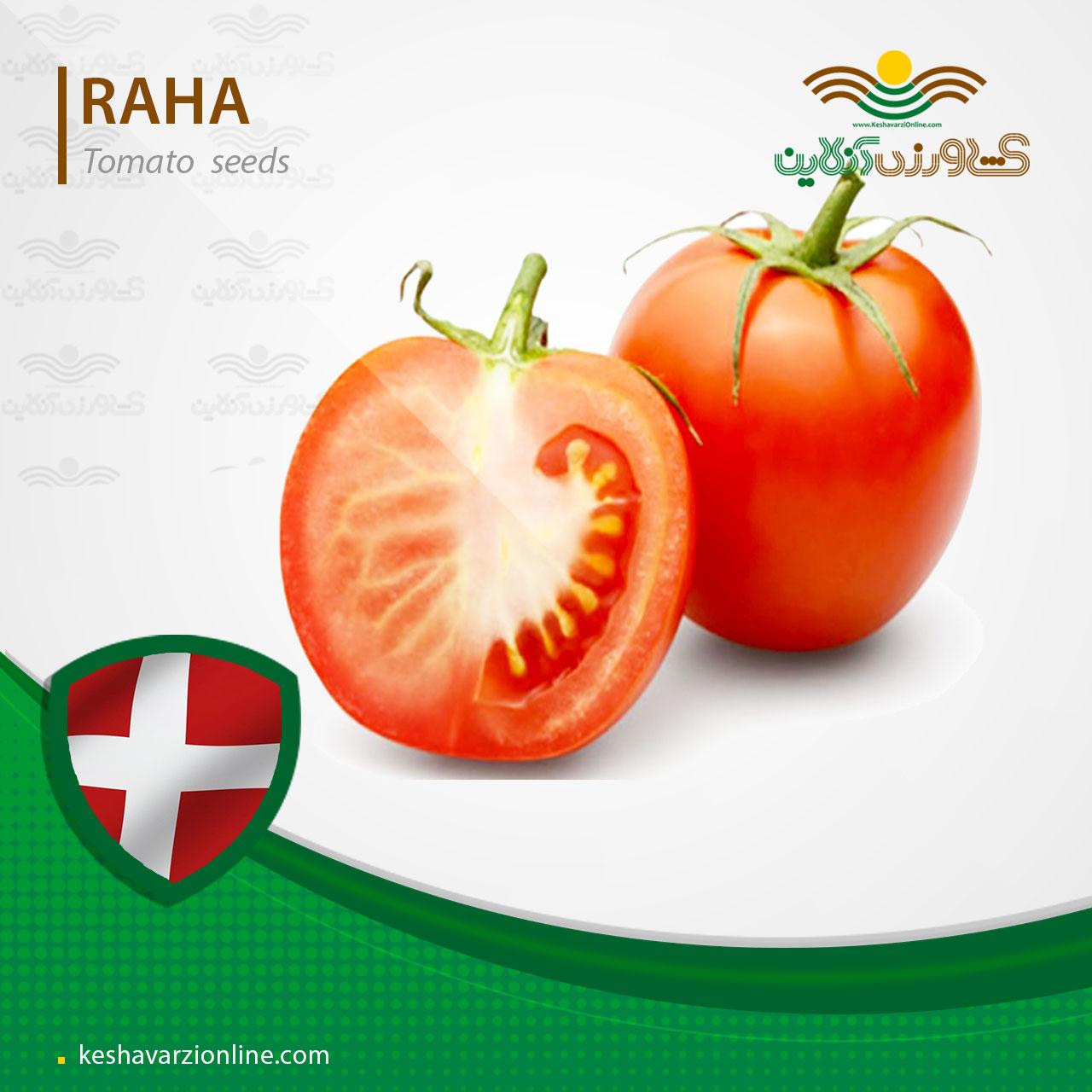 بذر گوجه فرنگی رها