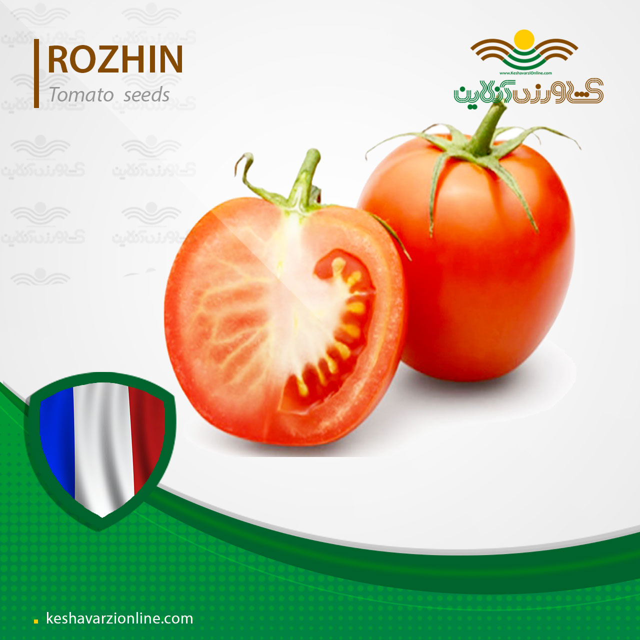 بذر گوجه فرنگی روژین