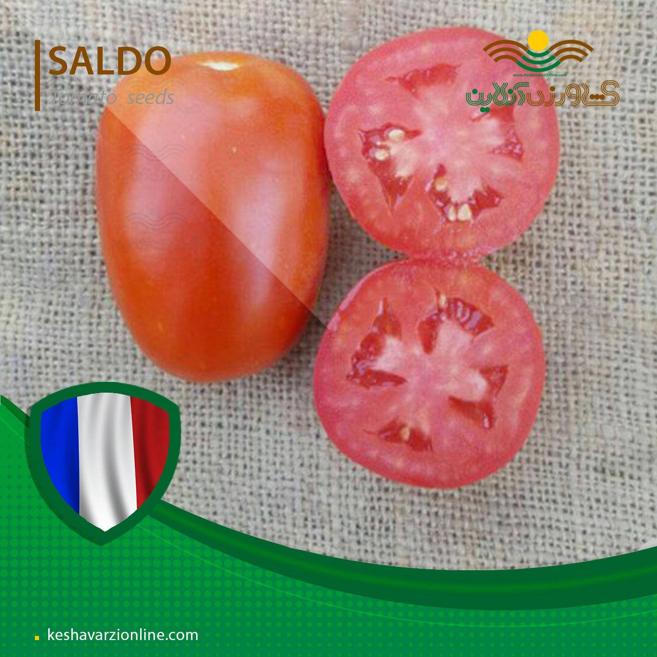 بذر گوجه فرنگی سالدو