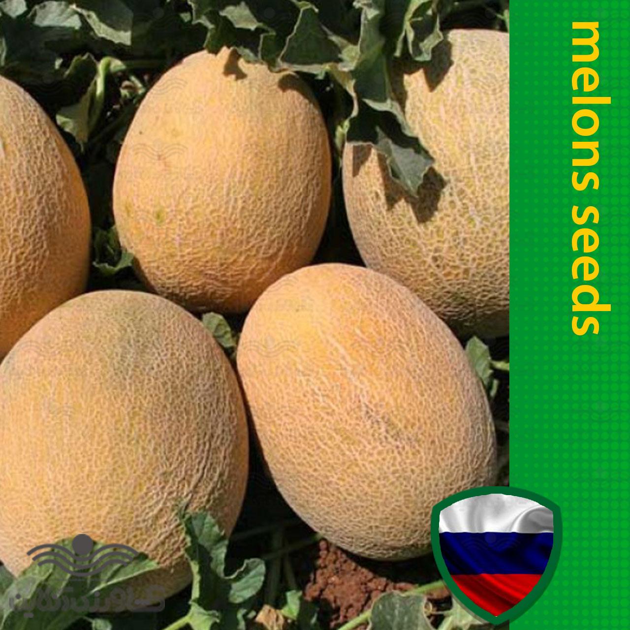 بذر خربزه آناناسی خارجی خانگی