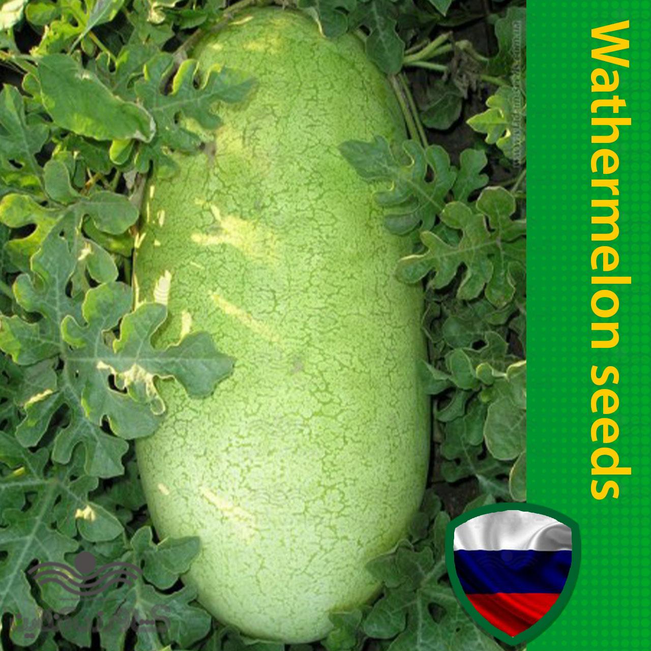 بذر هندوانه سفید خارجی خانگی