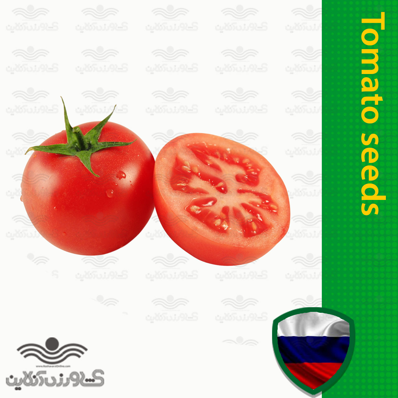 بذر گوجه فرنگی گرد خارجی خانگی