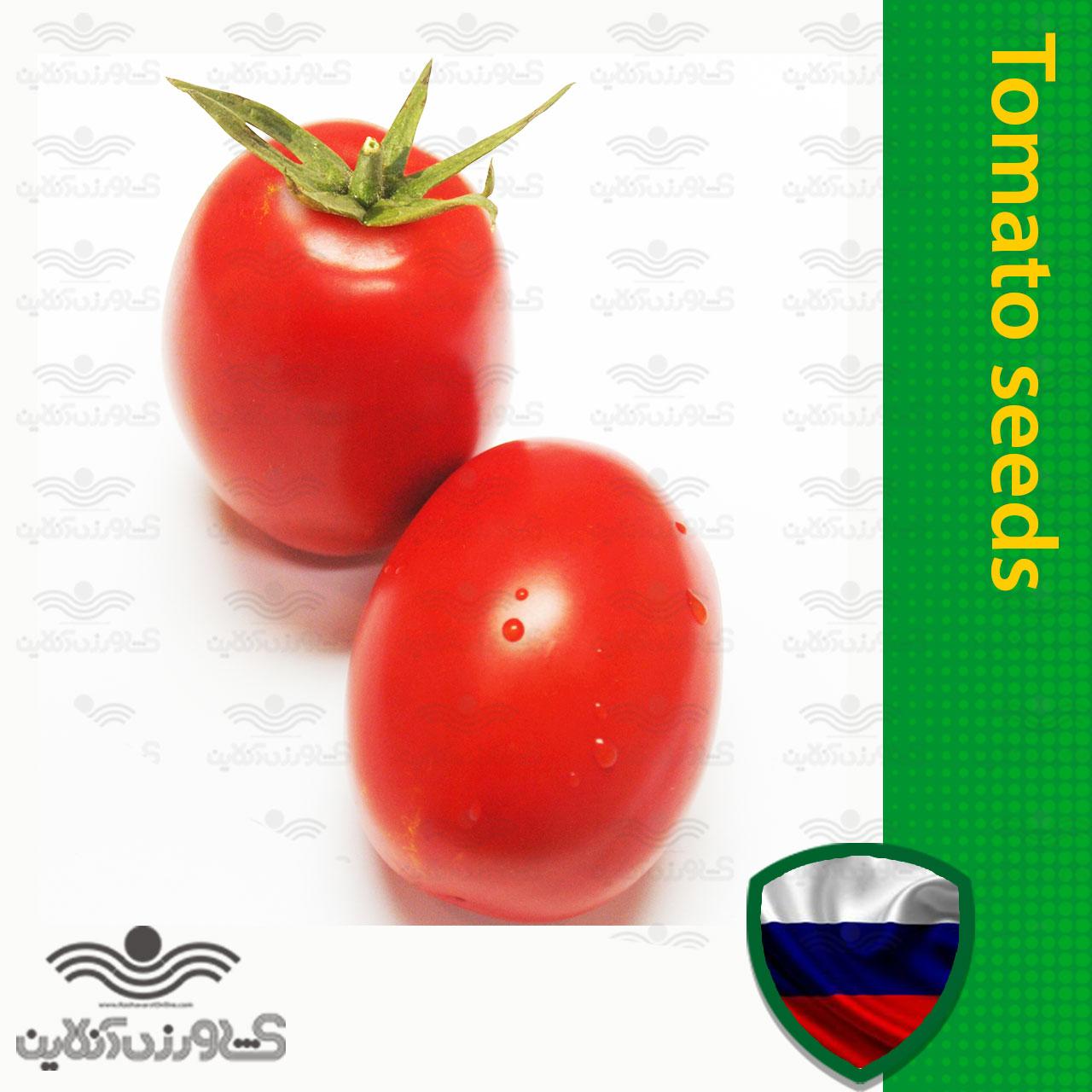 بذر گوجه فرنگی تخم مرغی خارجی خانگی