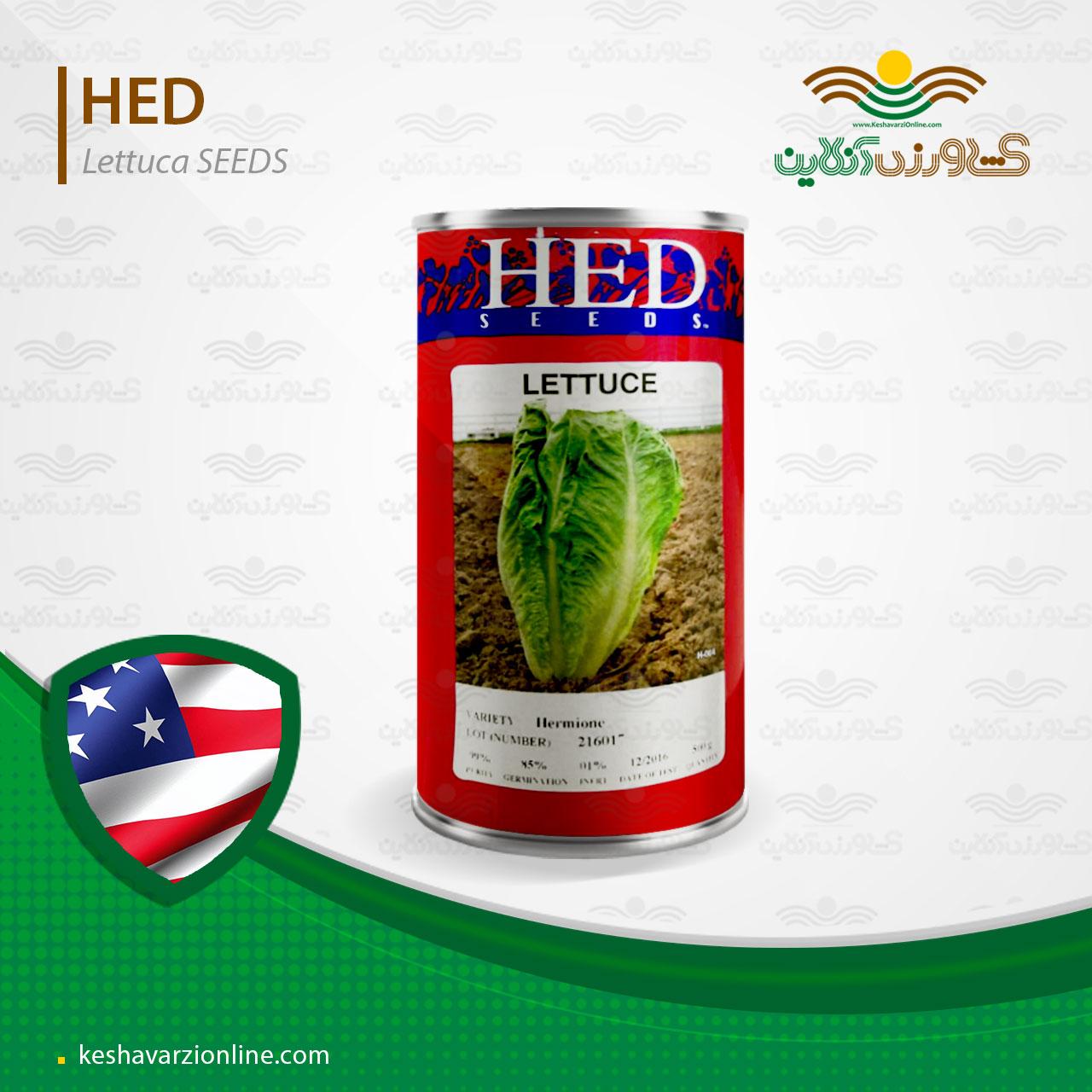 بذر کاهو سالادی هد آمریکا