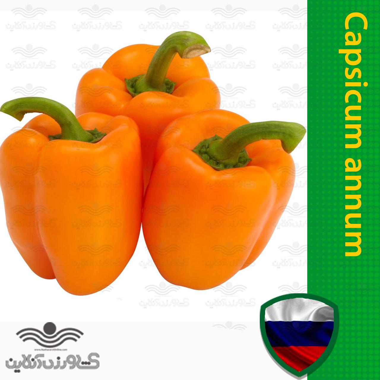 بذر فلفل دلمه ای نارنجی هیبرید خارجی