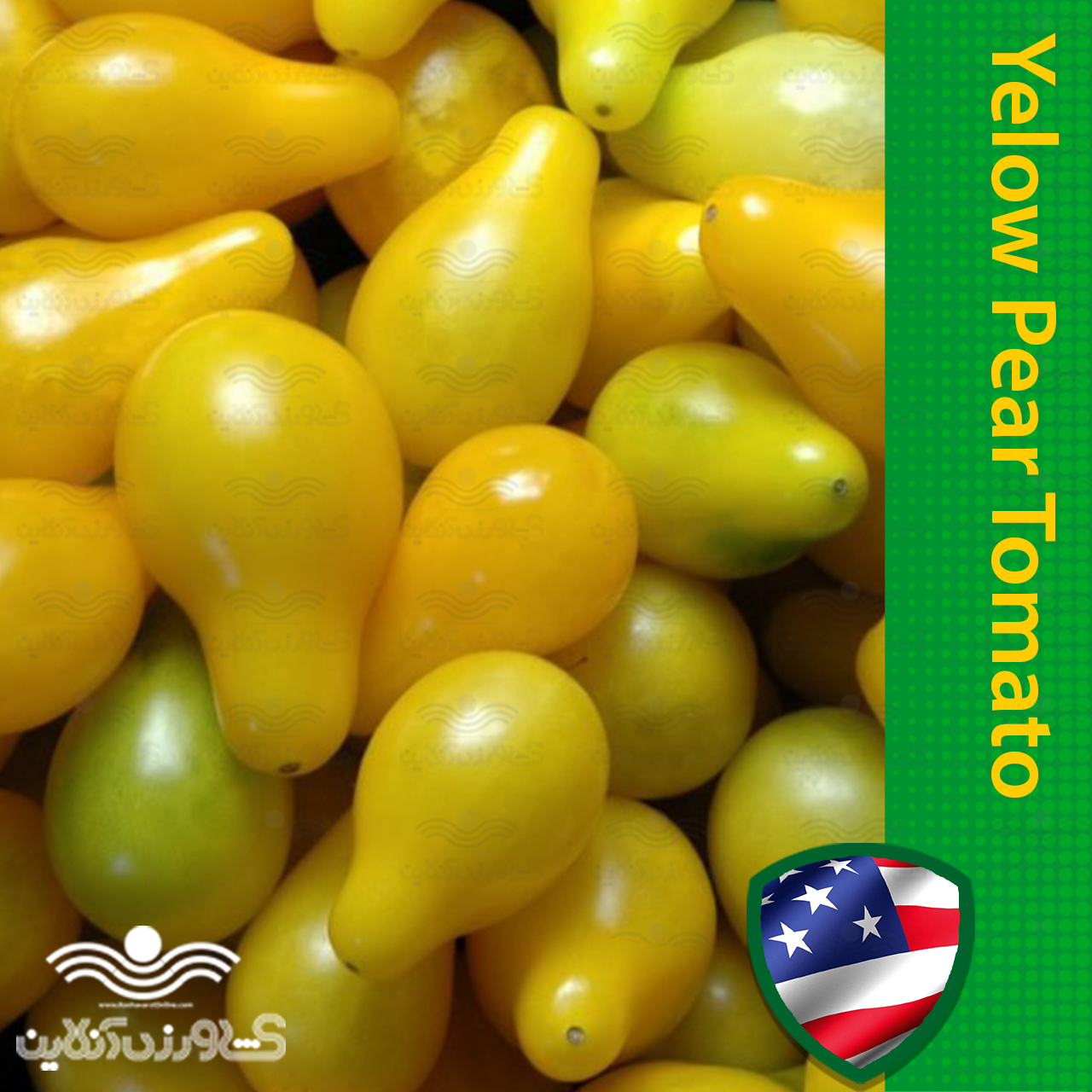 بذر گوجه چری زرد گلابی