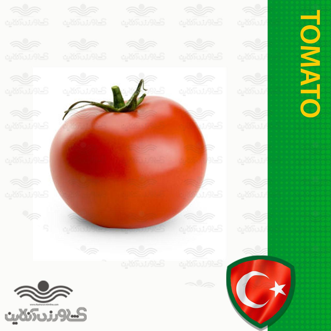 بذر گوجه درشت فالکن