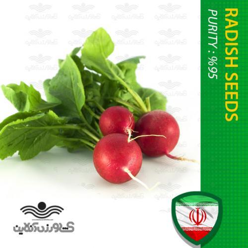 بذر سبزی تربچه