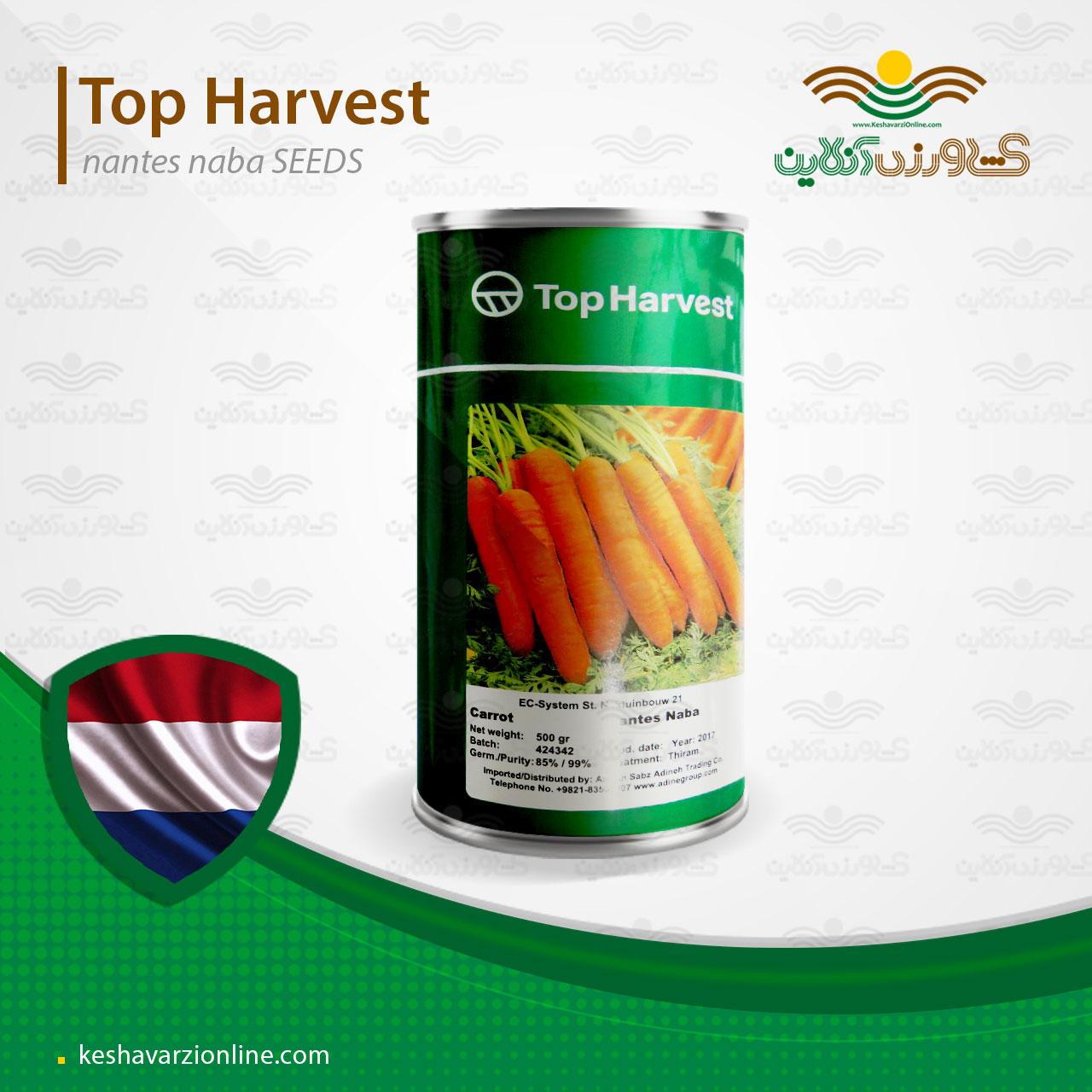 بذر هویج نانتس نابا تاپ هاروست